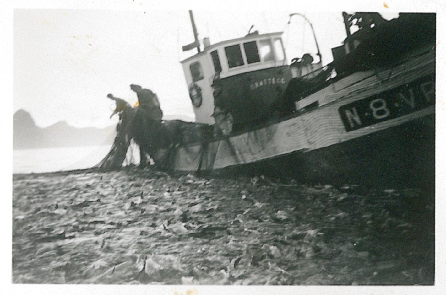 Brattegg med storkast på 30.000 kilo sommeren 1959